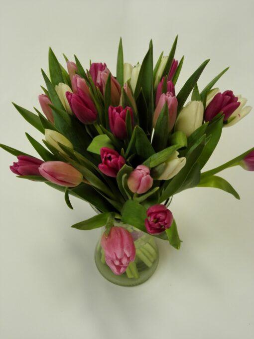 20 ks tulipánů - míchané barvy