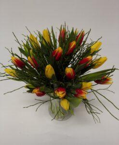 Tulipány 25 kusů