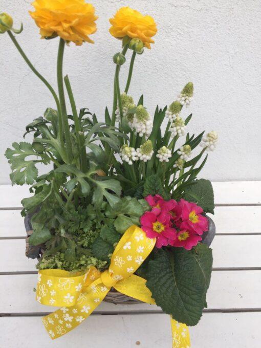 Sesazovaný jarní košík s modřencem, primulkou a ranunculusem