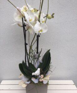 Orchidej Phalenopsis s velikonoční ozdobou v dekoračním obalu