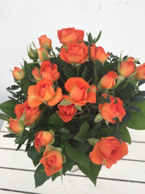 Kytice - krásné trsové růže