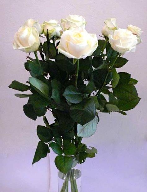 Kytice bílých růží Avalanche - 9 ks