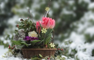 flowers-3135847_1280